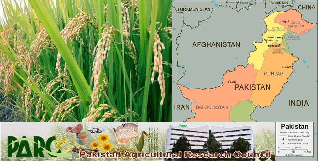 Pakistan has developed 7 new rice varieties