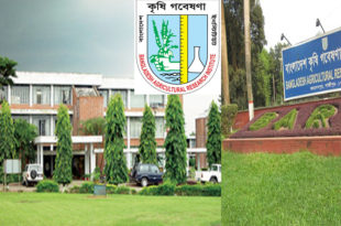 The success of Bangladesh Agricultural Research Institute