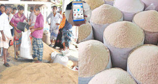 Govt. will buy paddy and rice from farmers online