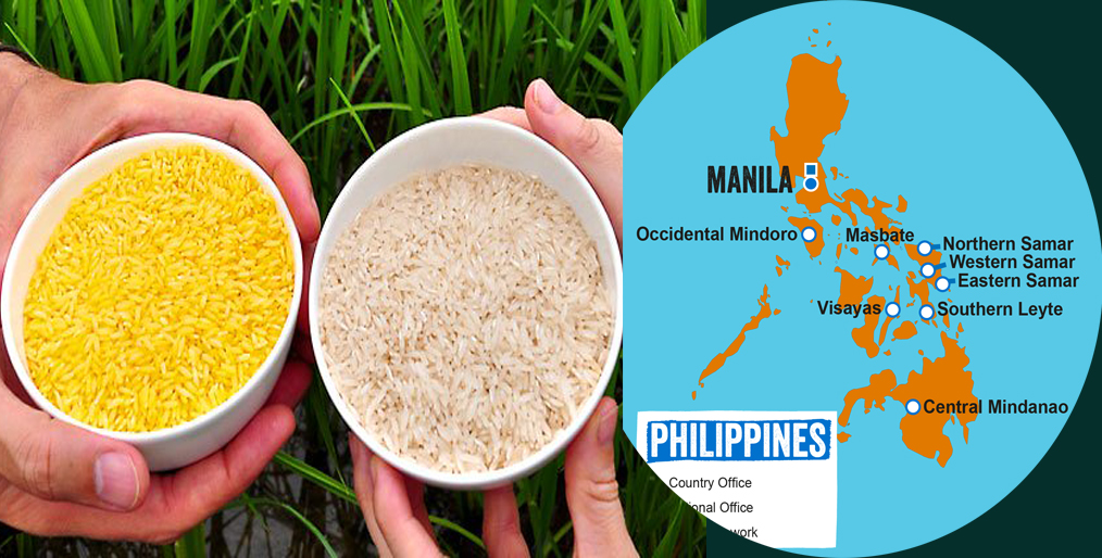 Philippines approves Golden Rice