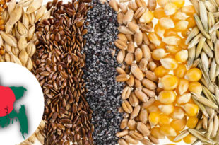 Bangladesh is the 11th largest producer of cereals in the world