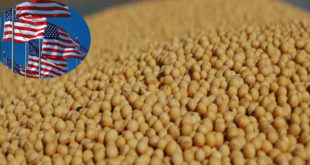 US organic soybean supply forecast to decline