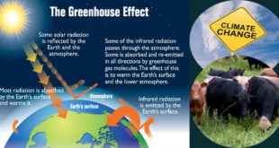 Helping cows fight against climate change