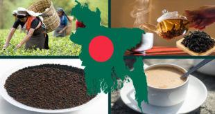 Bangladesh has a high record of tea production