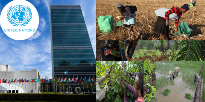 UN aims to help the poorest growers
