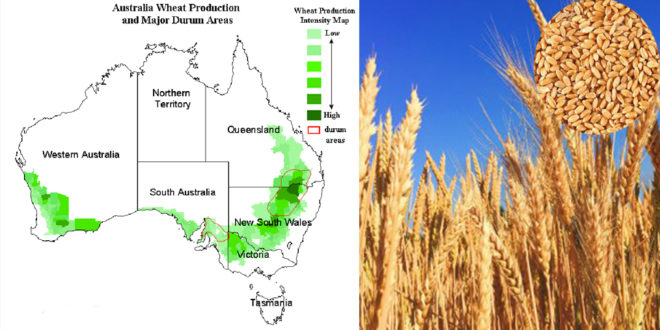 Australia's wheat production has declined