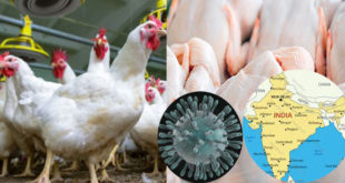 Coronavirus panic in India reduces chicken sales