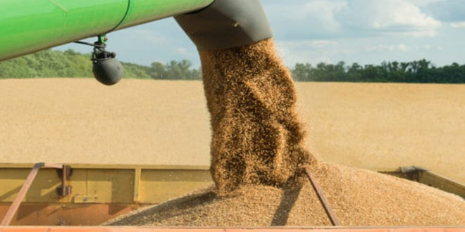 Russia's top wheat export factor predicted to remain