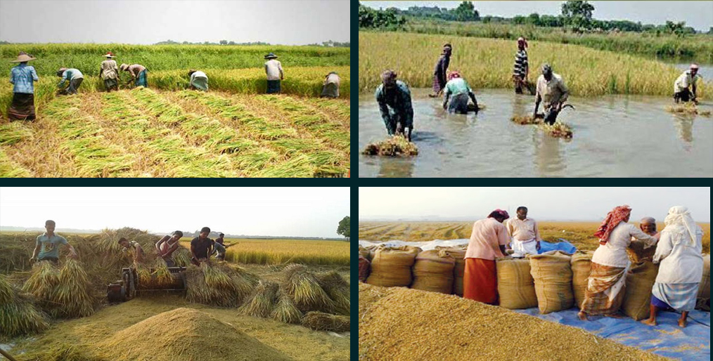 Tk. 22,000 cr worth of crop loss in value chain management
