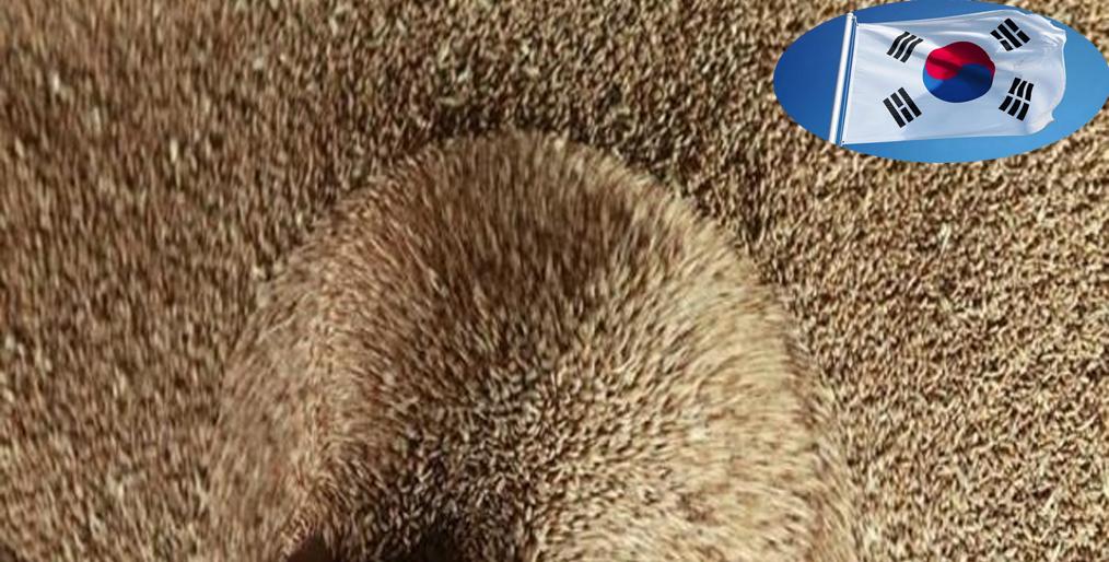 S. Korea's NOFI will buy 60,000 tons of feed wheat