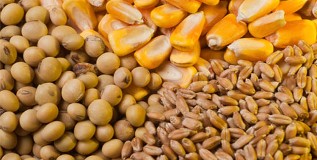 Soybean corn and wheat prices have risen again