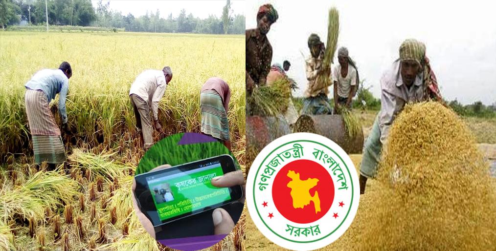 Bd govt will buy Boro through the app