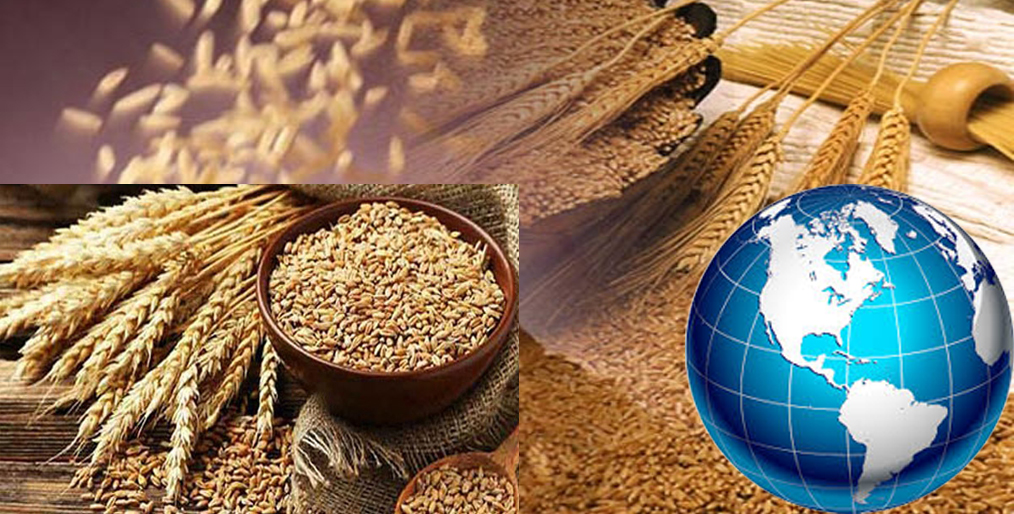 How is the current world market price of wheat?