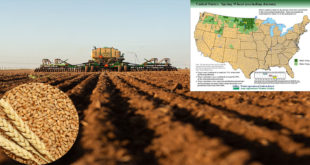 USDA forecasts regarding US Spring wheat plantation zone