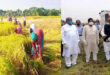 100% paddy harvest has been completed in Haor