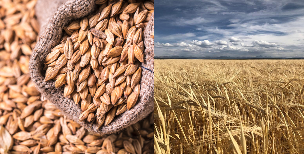 China has approved a protocol allowing access for U.S. Barley
