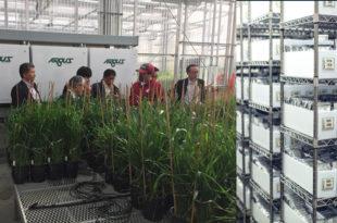 Research & Plant Breeding: U.S. Wheat Supply Chain System