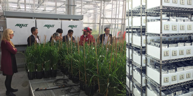 Research & Plant Breeding: U.S. Wheat Supply Chain System