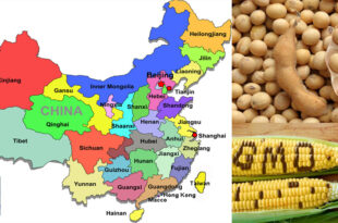 China issues bio-safety certificate for GM soybean & maize imports