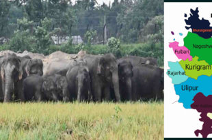 Farmers in Kurigram are worried about crop damage due to Indian elephant attack
