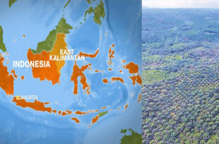 Indonesia plans to increase food security in Borneo
