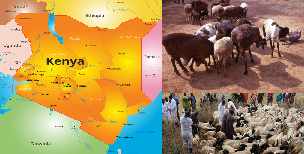 Kenya's herders hammered by coronavirus curbs