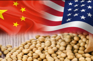 Soybeans edge higher on China demand...