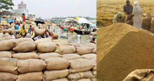 'Farmers have to sell paddy at a lower price than the govt. price'