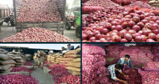 New record in onion imports: About six lakh tonnes of onions are coming by sea