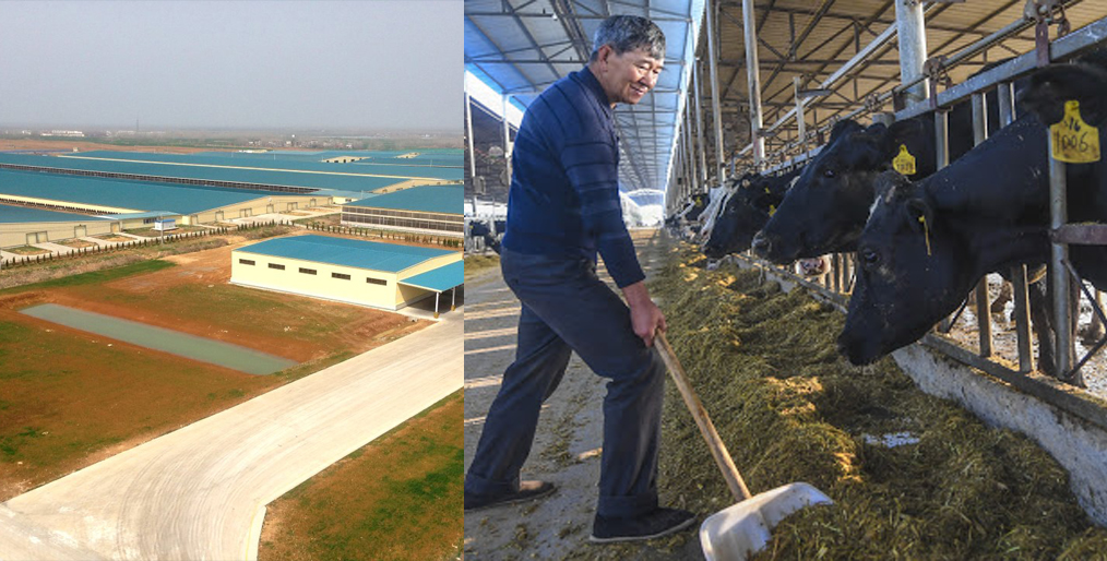 China is promoting high-quality development of the animal husbandry industry