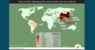 Take a look at the top ten rice producing countries in the world according to FAO data