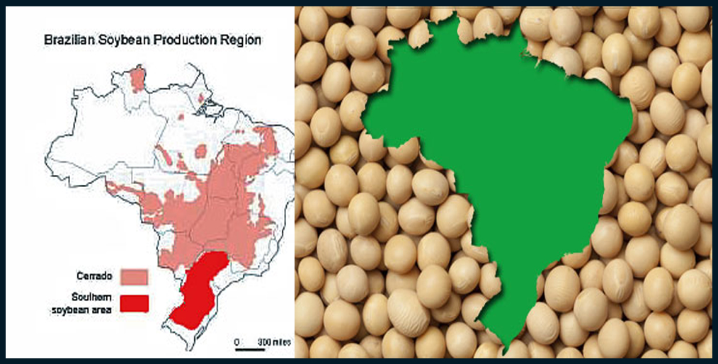 Brazil's soy frontier will grow rapidly in four years