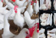 South African poultry producers have invested more than $60 Million in Expansion