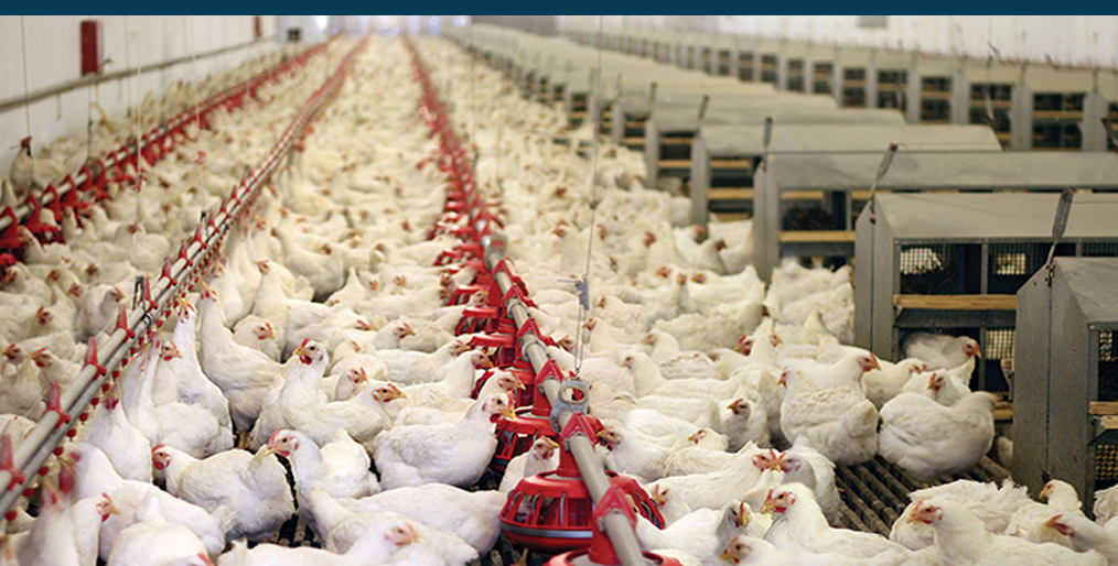 China suspends poultry imports from second U.S. plant!