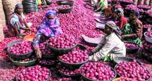Price of onion has increased by Tk. 20 in one day