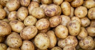 Fire in potato market, TCB will sell potatoes at Tk. 25