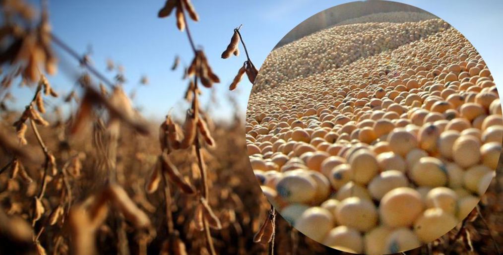 Argentina has temporarily cut soybean export taxes by 3 percentage points to 30% to help stimulate trades