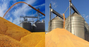 Corn soybeans have increased the amount of damage caused by crop pressures in the United States
