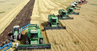 Ukraine has harvested 80% of its sown land and completed 76% of its winter crop planting