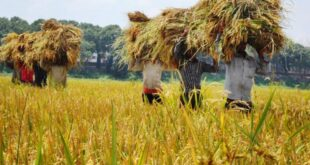 Even in Corona epidemic situation Bangladesh farmers are repaying more loans