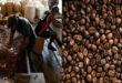 New York cocoa hit a 9-month high; Gains sugar and coffee