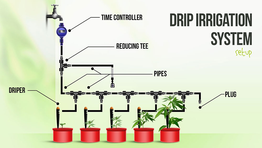 Drip irrigation emerged to solve the problem of paddy and rice