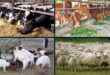 'Khamari' for providing technical capital assistance to livestock farmers