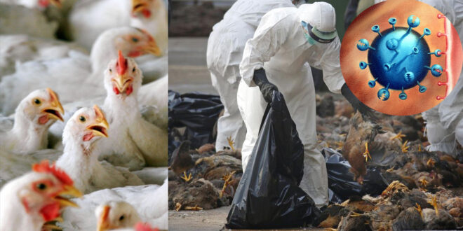 Czech Republic has reported an outbreak of H5N8 bird flu at a poultry farm