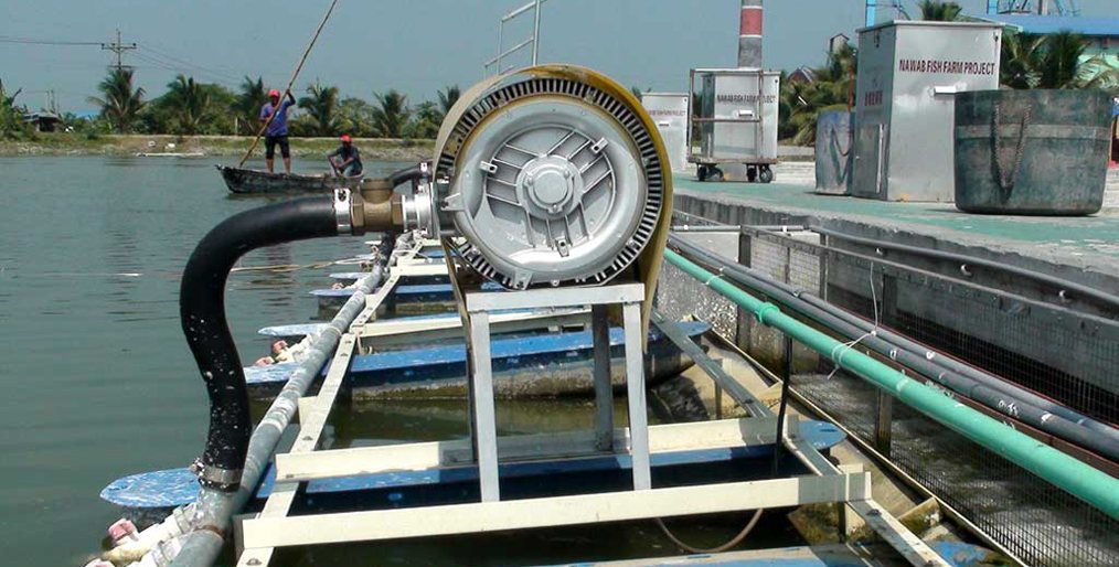 IPRS makes strong commitment to increase fish production in Chapainawabganj, Bangladesh