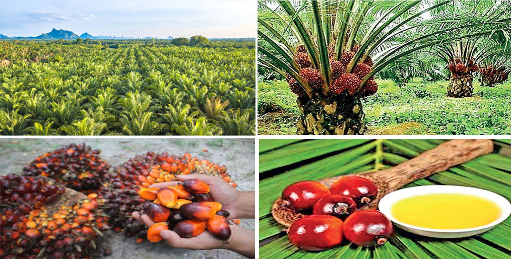 Sri Lanka bans palm oil imports urges producers to uproot plants