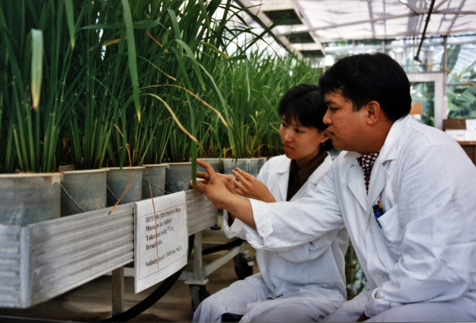 Nuclear technology is improving agriculture and food security in five ways
