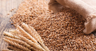 Pakistan will import another 4 million metric tonnes of wheat this year