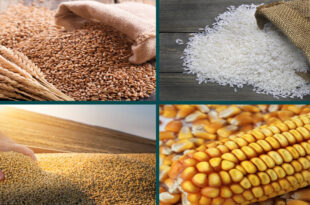 Grain Market Report : IGC, APRIL-2021