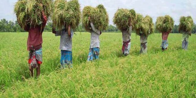 Agriculture and food systems in South Asia show resilience: Global Report